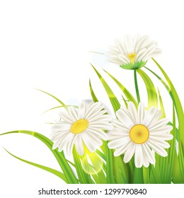 Spring daisies background fresh green grass, pleasant juicy spring colors, vector, illustration, template, banner, isolated