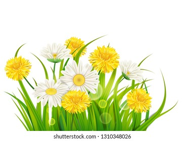 Spring daisies and dandelions background fresh green grass, pleasant juicy spring colors, vector, illustration, template, banner, isolated