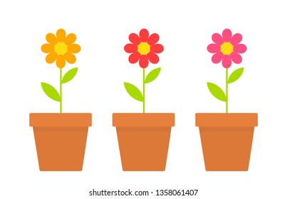 Spring daisy flowers in pots. Vector illustration