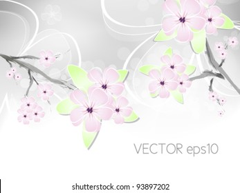 Spring flower background with abstract cherry blossoms against white to light grey color gradient