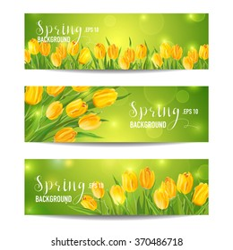 Spring Flower Banner Set - with Colorful Tulips - in vector