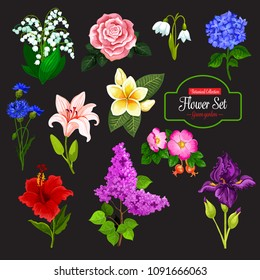 Spring flower cartoon icon set of wild flowering plant and tropical hawaiian flower. Rose, lily and snowdrop, iris, cornflower and lilac branch, lily of the valley, hydrangea, hibiscus and plumeria