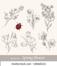 Spring flower set. Vintage floral collection with cherry, snowdrop, tulip, forget-me-not, narcissus and ladybug