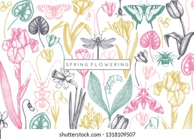 Spring flowers background. Floral invitation, greeting card design. Hand drawn insects illustrations. Botanical drawings of tulips, crocus, freesia, iris, narcissus, snowdrops, cyclamen. Vintage art