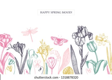 Spring flowers background. Floral invitation or greeting card design. Hand drawn illustrations. Botanical drawings of tulips, crocus, freesia, iris, narcissus, snowdrops, cyclamen. Vintage art.