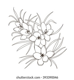 Spring flowers. Black and white bouquet. Vector illustration