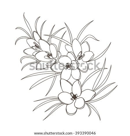 Spring Flowers Black White Bouquet Vector Stock Vector ...