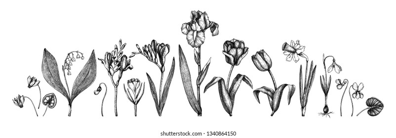 Spring flowers collection. Hand drawn floral outlines set. Botanical illustrations of tulips, crocus, freesia, iris, narcissus, snowdrops, cyclamen. Great for card, invitation,logos, mongram design