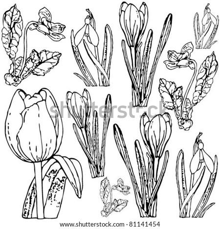 Spring flowers drawing black white stock vector royalty free spring flowers drawing black and white mightylinksfo