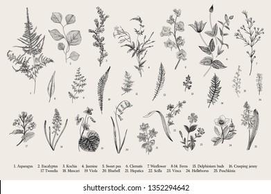 Spring flowers and ferns. Set. Vintage vector botanical illustration. Black and white