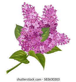 Spring flowers. Gentle fragrant branch of purple lilac. Vector illustration. Isolated on white background.