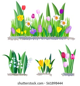 Spring flowers growing in the garden. Crocus, tulips and daffodils isolated on white background.