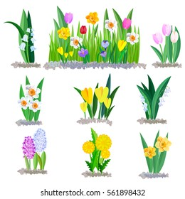 Spring flowers growing in the garden, icons and borders elements isolated on white.