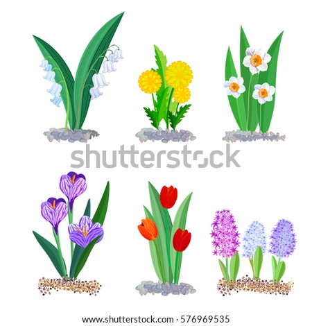 Spring flowers growing garden icons borders stock vector royalty spring flowers growing in the garden icons and borders elements isolated on white crocus mightylinksfo