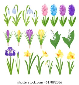 Spring flowers. Irises, lilies of valley,  narcissus, crocuses, snowdrops. Garden design icons isolated on white background. Cartoon style vector illustration
