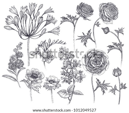 Spring flowers isolated set hand drawing stock vector royalty free spring flowers isolated set hand drawing african lily ranunculus anemones lilac mightylinksfo