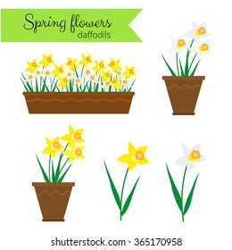 Spring flowers in long container and pots. White narcissus, yellow daffodils.