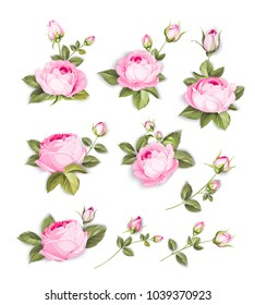 Spring flowers set over white background. Wedding flowers bundle. Flower collection of watercolor detailed hand drawn roses. Vector illustration.