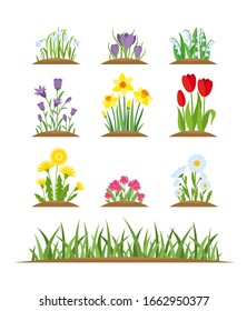 Spring flowers. Vector set of spring wild forest and garden flowers and grass isolated on white background. Cartoon tulip, crocus, daffodil, viola, chamomile, snowdrop, dandelion. Garden design icons.