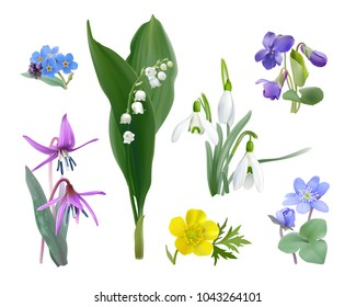 Spring forest flower set. Wildflowers as Snowdrops, Trout lily, Violets,  Forget me not, Buttercup and Liverwort. Vector illustration, realistic style, white background.