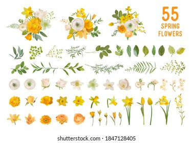 Spring garden flowers, yellow daffodil, mustard rose, white fresia, eucalyptus, greenery, fern. Vector design isolated elements set. Wedding summer bouquet collection for decoration, invitation, cover