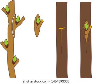 Spring grafting tree. Side graft