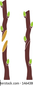 Spring grafting tree. Splice Graft