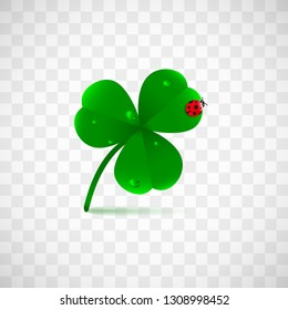 Spring green plant fhree leafed clover with dew, raindrops or waterdrops and ladybug isolated on transparent background. Saint Patrick's holiday object