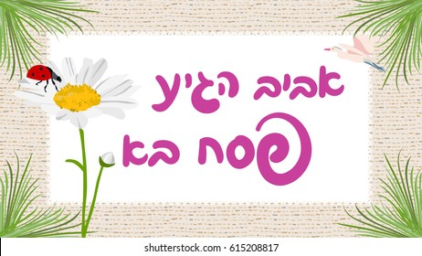 spring is here, happy Passover greeting card with hebrew typography, vector daisy and ladybug, with matzo background