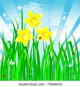 Spring landscape with the daffodils, grass and ladybirds. Vector.