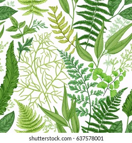 Spring leafy green seamless pattern. Vintage floral background with different ferns.  Botanical illustration. Green.