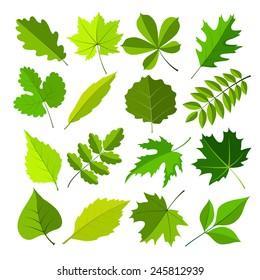 spring leaves flat style set. vector illustration
