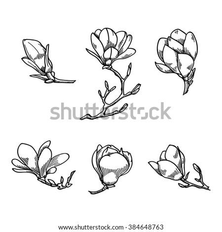 Spring magnolia flower black white hand stock vector royalty free spring magnolia flower black and white hand drawn vector sketch spring flowers collection mightylinksfo