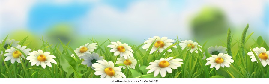 Spring nature landscape vectorized illustration. Background with green grass and chamomile. 3d vector horizontal panorama