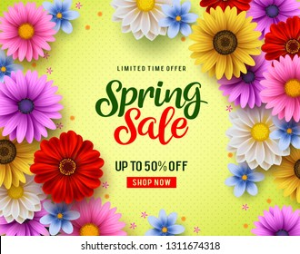Spring sale vector banner with colorful chrysanthemum and daisy flowers elements and spring season discount promotion text. Vector illustration.