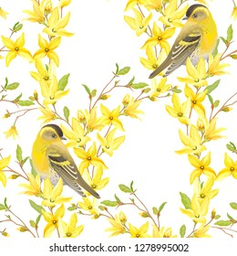 Spring seamless pattern with birds Siskin, blossoming yellow flowers and green leaves on branches Forsythia. Vector illustration in watercolor style on white background.