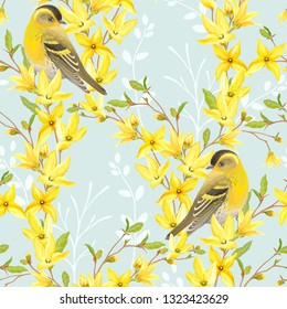 Spring seamless pattern with birds Siskin, blossoming yellow flowers and green leaves on branches Forsythia. Vector illustration in watercolor style on turquoise background.