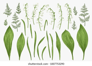 Spring set with lily of the valley flowers and herbs. Botanical illustration.