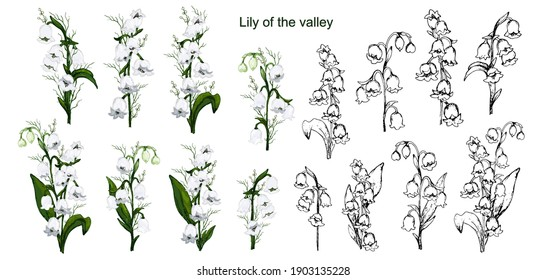 Spring set with lily of the valley flowers. hand-drawn realistic bouquets isolated on a white background. Botanical vector illustration in vintage style. for paper, greetings, postcards, paper, cards.