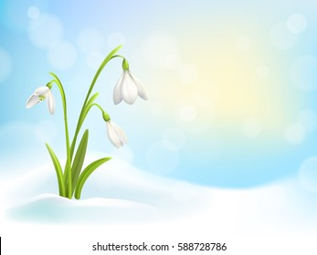 Spring snowdrop flowers with snow on background with blue sky, sun and blurred bokeh lights. Vector illustration.