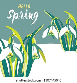 Spring snowdrops in the snow. Vector illustration on green background with Hello Spring quote