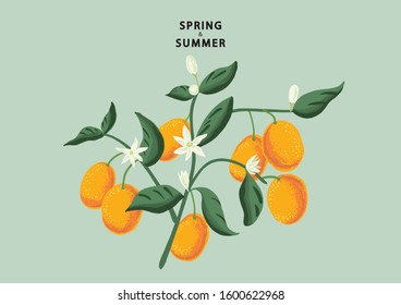 Spring and Summer Kumquat Branch with Fruits, Flowers and Leaves. Vector Illustration