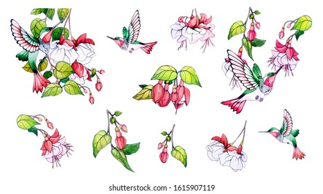 Spring, summer set, pink flower, green leaves, branch, colibri. Collection floral watercolor decorative elements. Botanical vector stock illustration in vintage, watercolor style. Isolated background