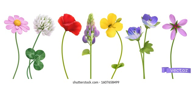 Spring and summer wildflowers. Flowers 3d realistic vector set
