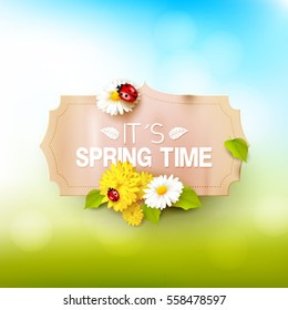 Its spring time. Spring background with flowers, leaves and ladybugs