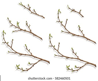 Spring tree branch with buds and small leaves. Branches of different sizes. Drawing, vector illustration, white background