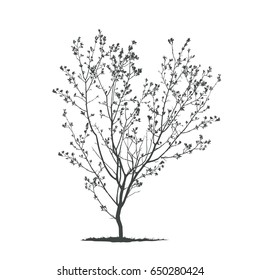Spring tree silhouette.