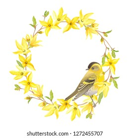 Spring wreath with bird Siskin, blossoming yellow flowers and green leaves branches Forsythia. Vector tender illustration on white background in watercolor style.