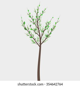 Spring young tree vector illustration