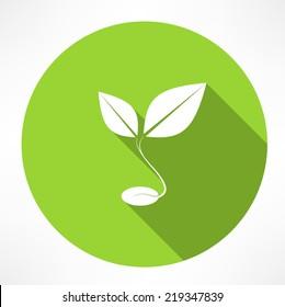 sprout grain icon